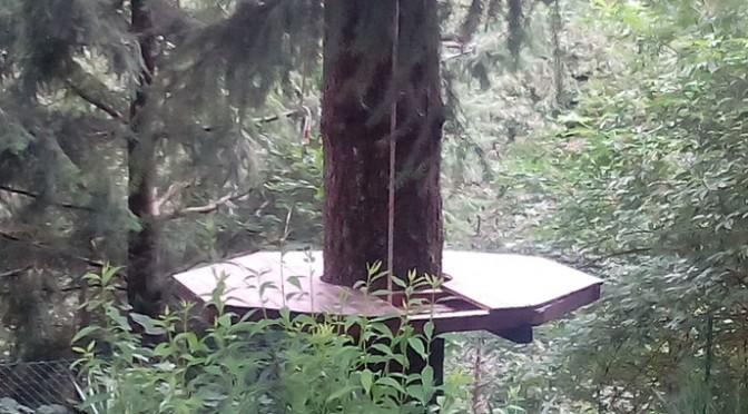 Vivere la natura: casetta sull'albero. Giorno 3